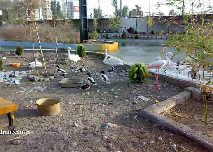 باغ پرندگان فریدون کنار