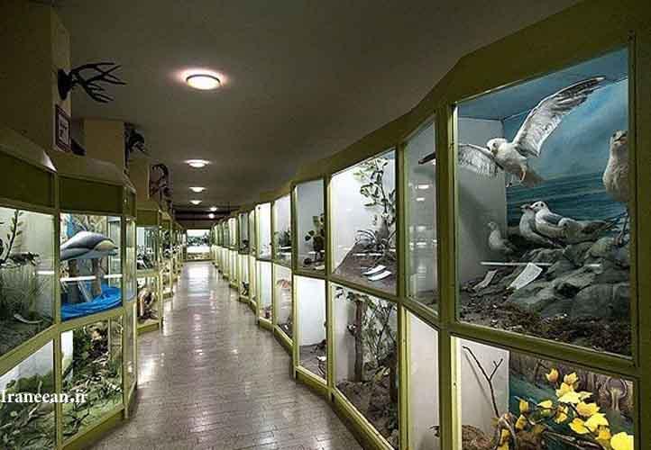 موزه طبیعی همدان
