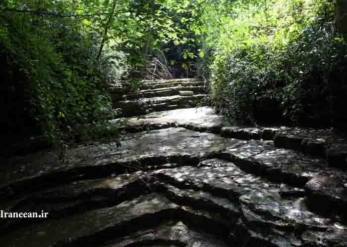 جنگل پلکانی کلاله