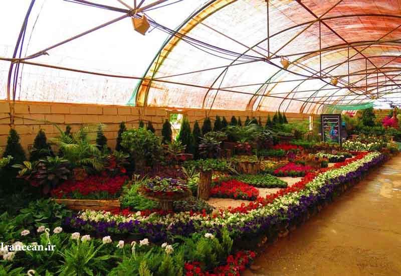 دهکده گل و گیاهان زینتی
