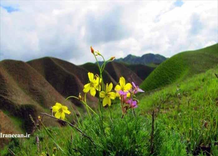منطقه شکار ممنوع عزیز آباد