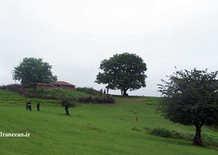 منطقه شکار ممنوع چلاو