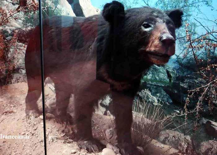 موزه حیات وحش بندرعباس