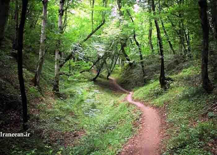 پارک جنگلی بز چفت
